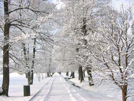 arboretum inverno