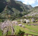 Gran Canaria mandorli in fiore