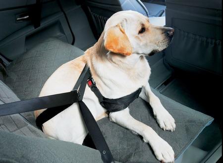 viaggiare in auto con il cane