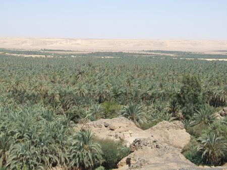 Vegetazione nelle oasi
