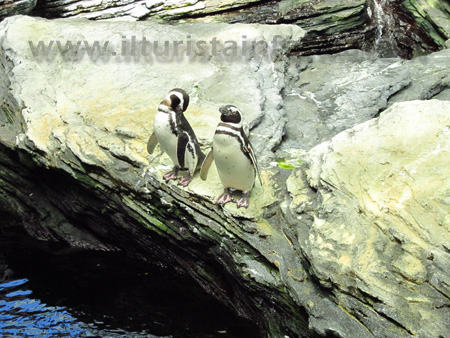 Pinguino Oceanario