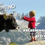 Malga, mucche e buon cibo: come vivere un Trentino insolito