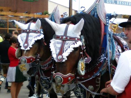 Un particolare della sfilata cavalli bavaresi