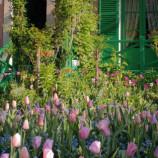 Impressioni d'estate a Giverny: un viaggio nell'universo di Monet