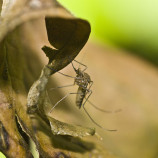 5 rimedi da viaggio per proteggere i bambini dalle zanzare