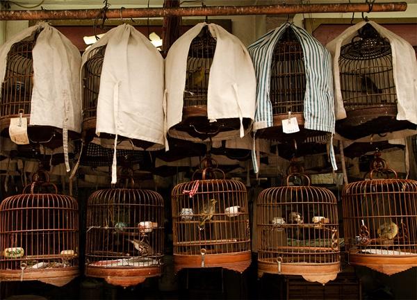 Mercato degli uccelli Hong Kong