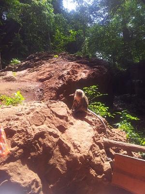 Scimmie al tempio