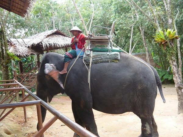 sull_elefante_in_thailandia