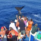 Whale watching a Genova con Pecora Verde