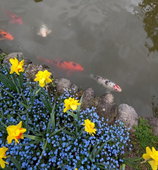 Laghetto e pesci